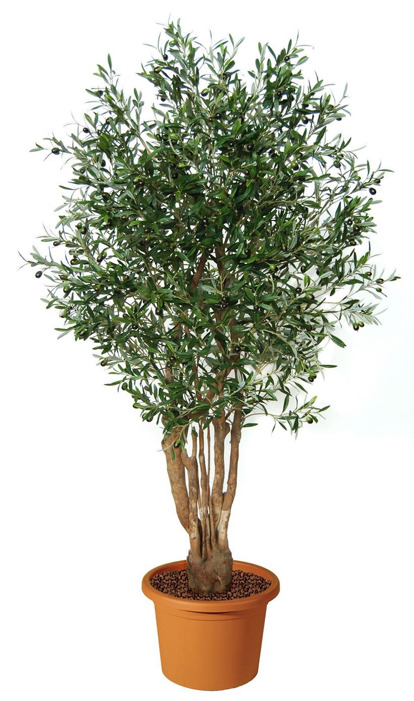 Olivo malabar artificiale h9304 for Vendita piante ulivo